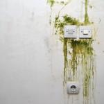 Odstranění plísní savo